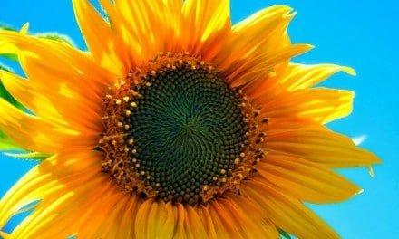 Skriv en dikt om augusti och avsked – skrivövning