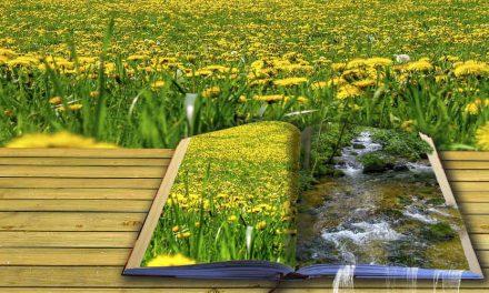 Skriv om prosa till poesi
